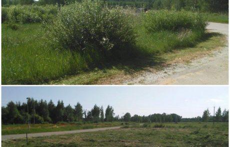 Muru niitmine trimmerdamine võsa lõikus Pärnus ja Pärnumaal